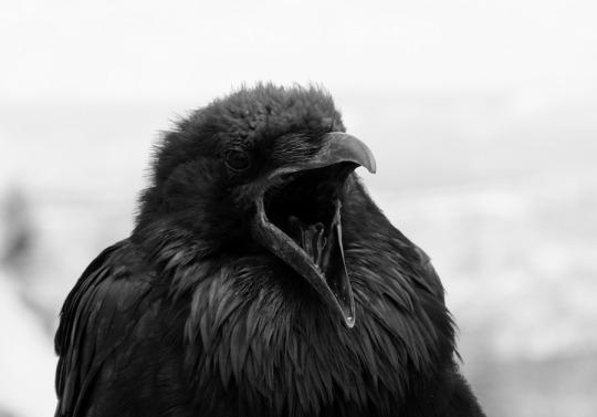 ravenscream