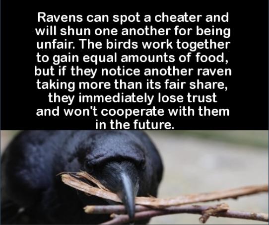 ravenfair