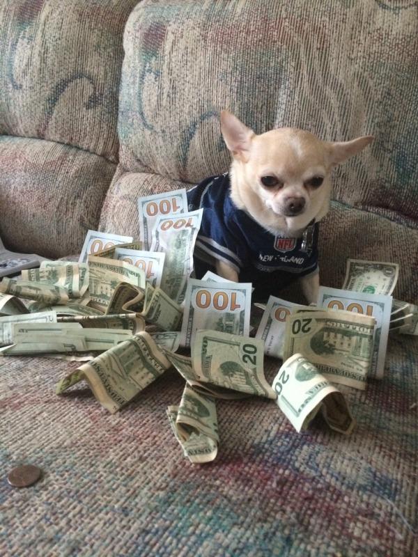 moneydog2